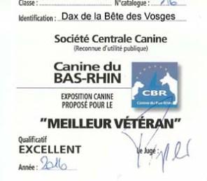 """Carton """"Meilleur Vétéran"""" pour Dax de la Bête des Vosges lors de l'Exposition Canine Nationale de Strasbourg 2016"""