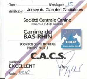 """Carton """"CACS"""" pour Jersey du Clan des Gladiateurs lors de l'Exposition Canine Nationale de Strasbourg 2016"""