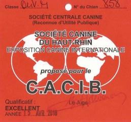 CACIB Jersey du Clan des Gladiateurs - Mulhouse 2018