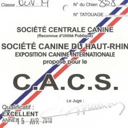 CACS Jersey du Clan des Gladiateurs - Mulhouse 2018