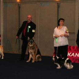 Dax de la Bête des Vosges sur le Ring d'Honneur lors de l'Exposition Internationale Canine de Mulhouse.