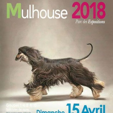Exposition Canine Internationale - Mulhouse 2018